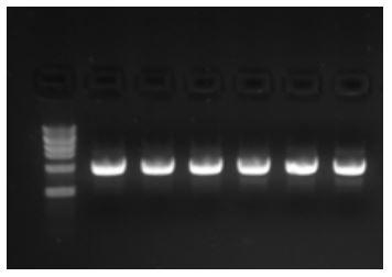 Plasmid DNA Purification - E.Z.N.A.® Plasmid DNA Mini Kit I - Figure 2