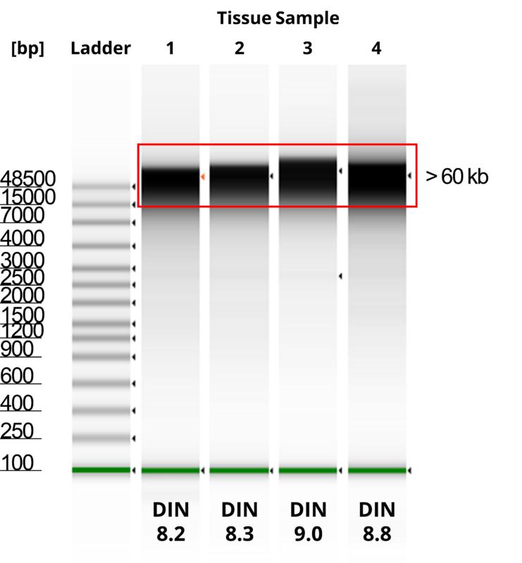 Tissue & Blood DNA Extraction - Mag-Bind® Blood & Tissue DNA HDQ Prefilled 96 Kit - Figure 3